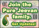 Raw Foods / Living Foods Newsletter from Pure Jeevan